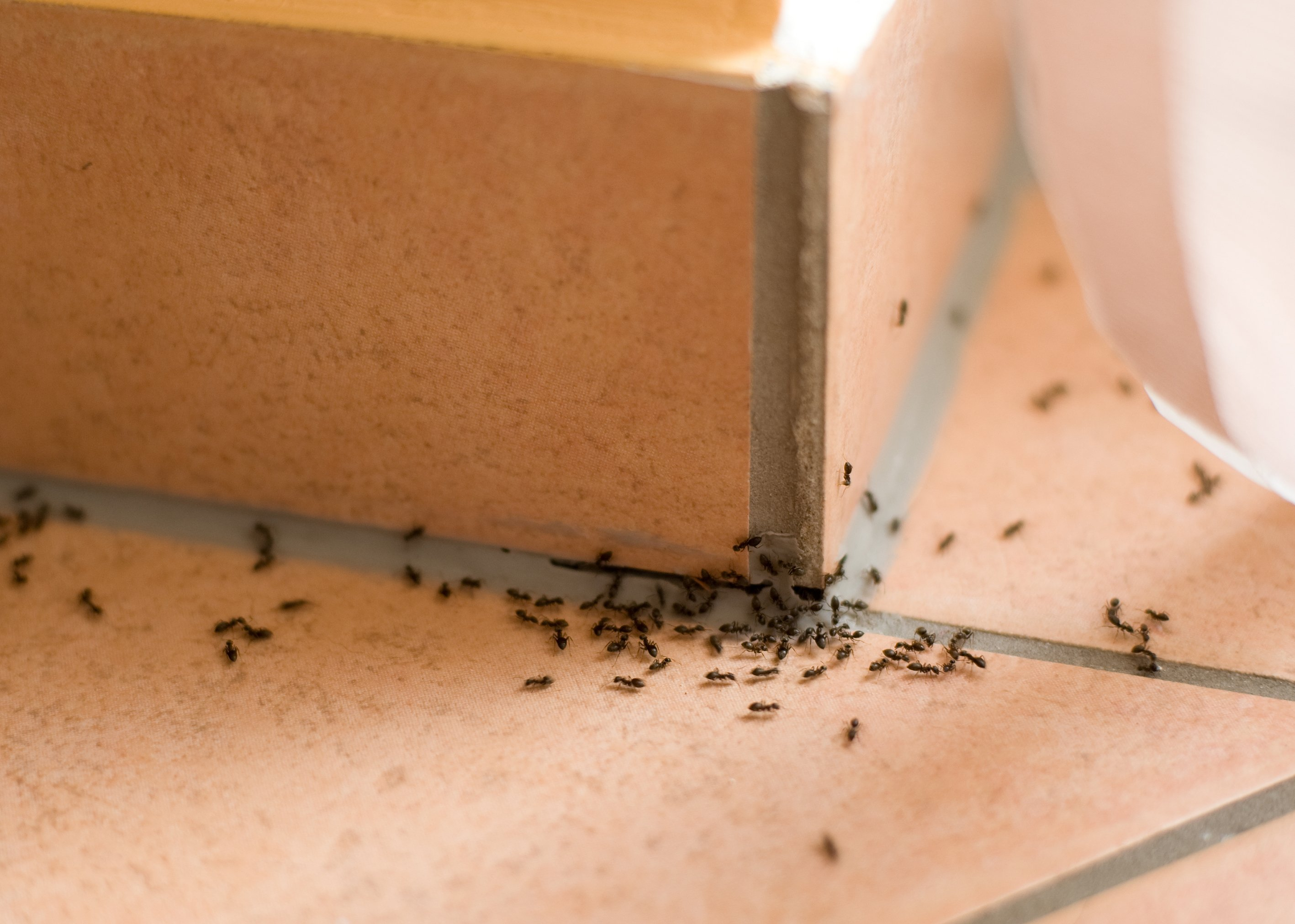 The Top 5 Easiest Ways How to Get Rid of Ants
