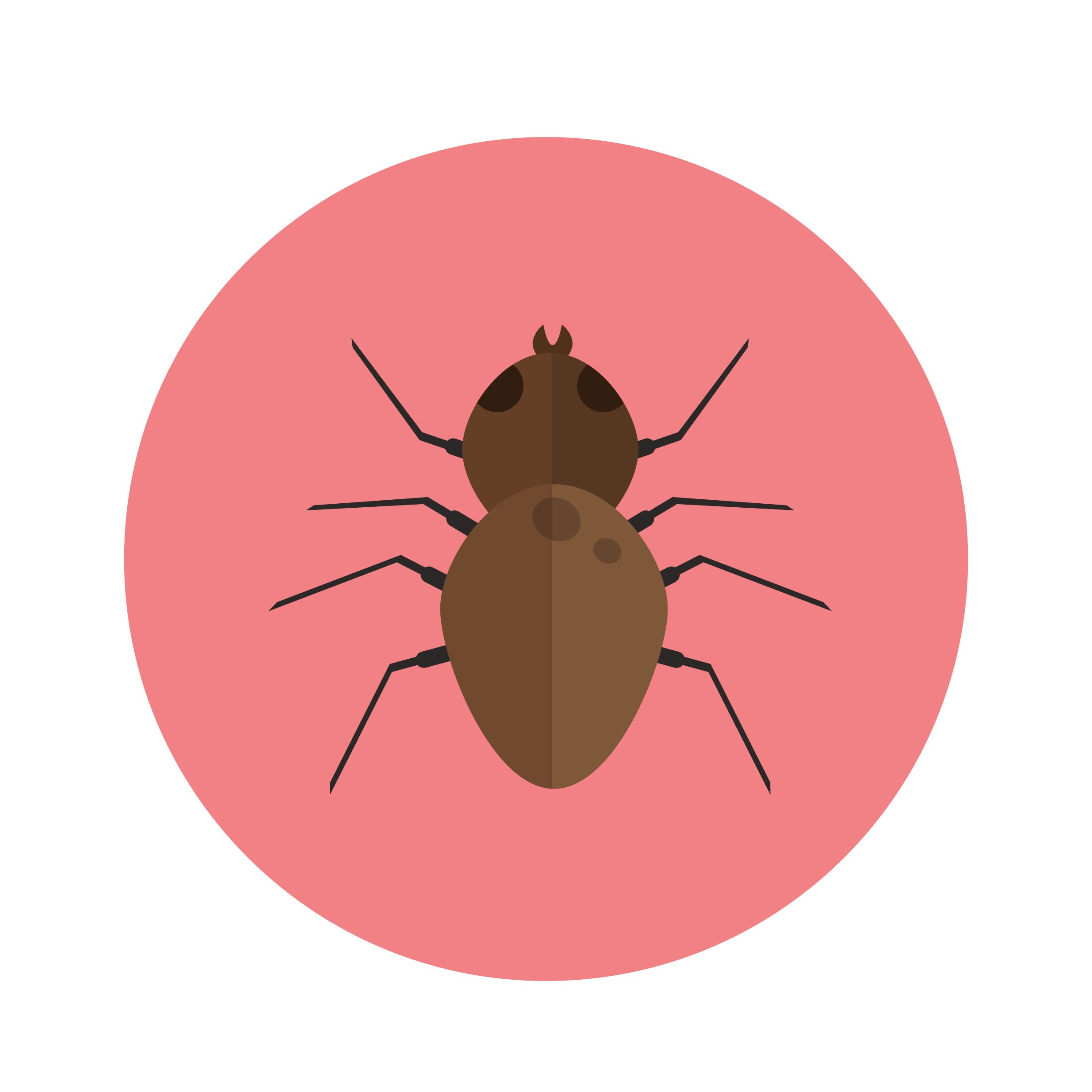 An illustration of a bed bug