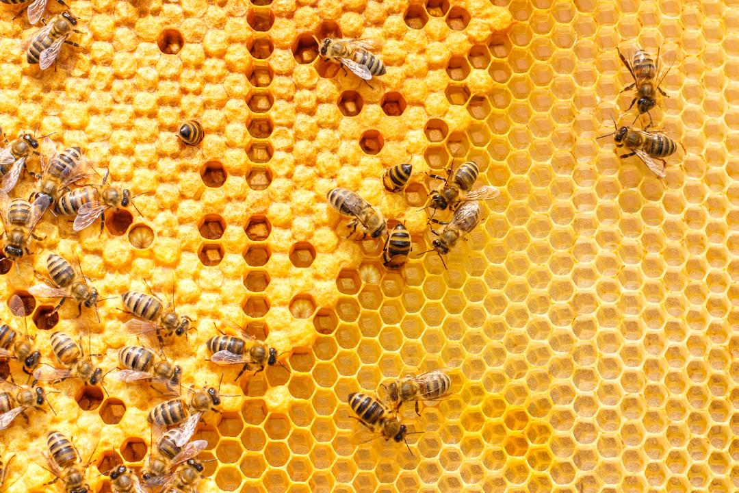 Honey bees scurrying about in their hive