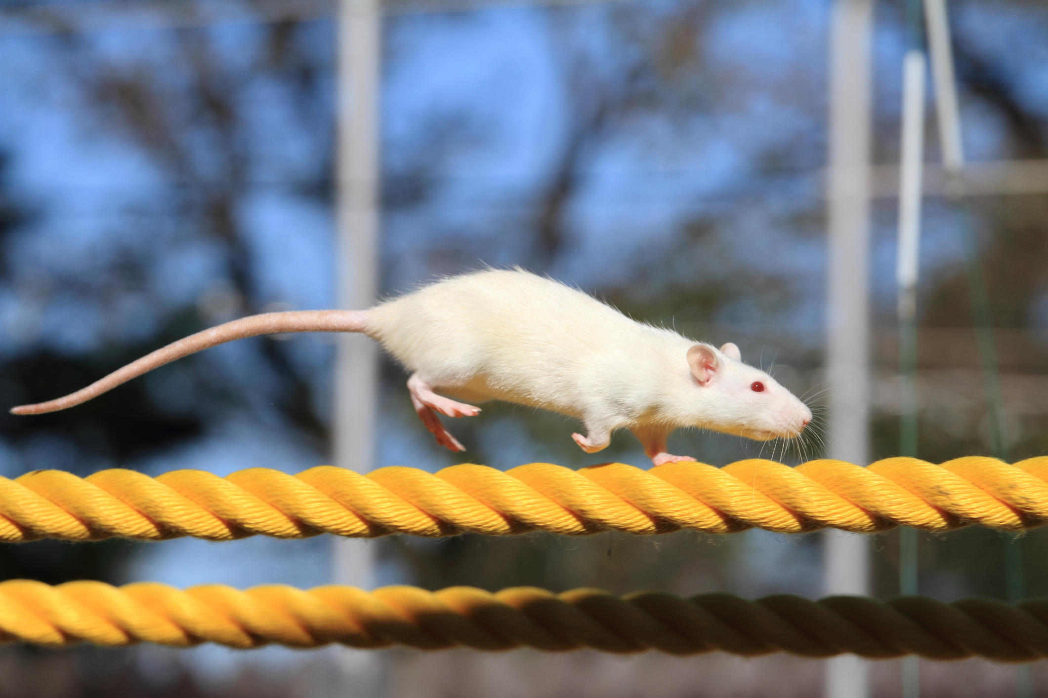 (VIDEO) General Pest Control: How To Keep Rodents Away