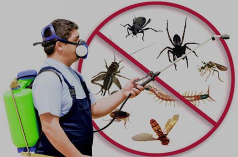 A pest control specialist beside an image of unwanted pests