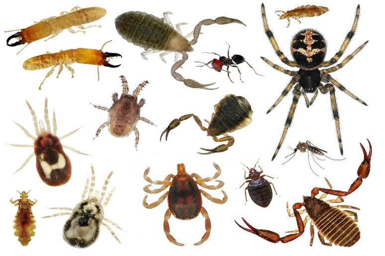 A variety of springtime pests like ticks, scorpions, spiders and earwigs.